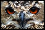 bengal eagle owl by netbandit