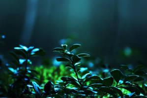 magical light by Andezigi