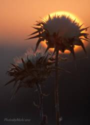 Solstice Sunset by Kyndelfire
