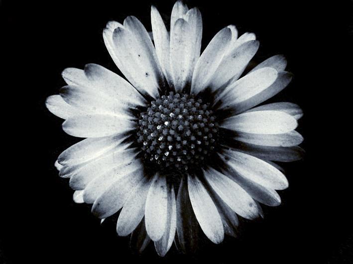 Flower by En-GeL