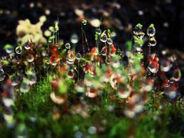 In Wonderland by En-GeL