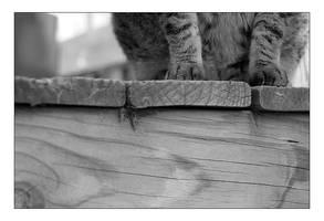 -kiwi paws- by fangedfem