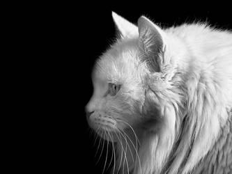 I am lion by fangedfem