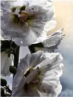 -storm flower- by fangedfem