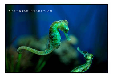 Seahorse Seduction by fangedfem