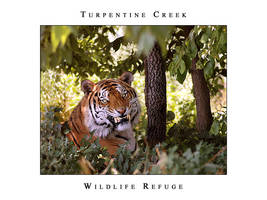 Turpentine Creek 02 by fangedfem