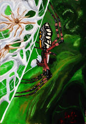 Argiope Aurantia by SpiderMilkshake