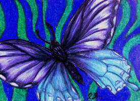 ACEO--Pipevine Swallowtail by SpiderMilkshake