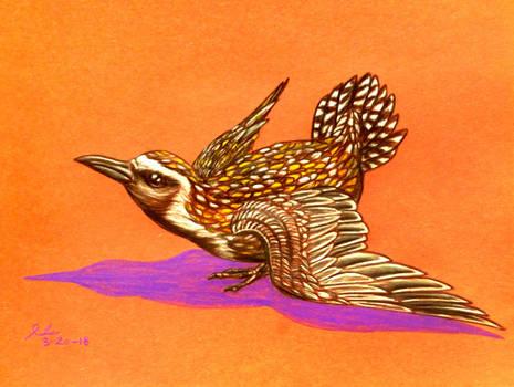 American Golden Plover by SpiderMilkshake