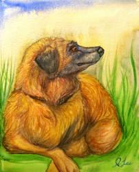 Fluffy Doggo by SpiderMilkshake