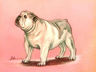 Charcoal Bulldog by SpiderMilkshake