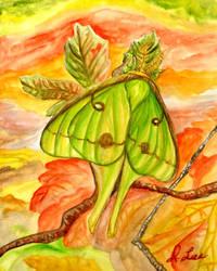 Luna Moth (For Sale) by SpiderMilkshake