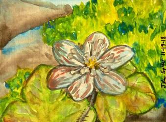 ACEO--Anemone Americana by SpiderMilkshake