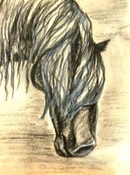 Charcoal Stallion Portrait by SpiderMilkshake