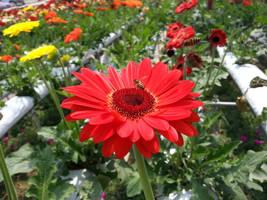 Flower by areev19