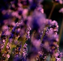 purple world by realta-eireann