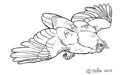 flying chicken sketch by Reptangle