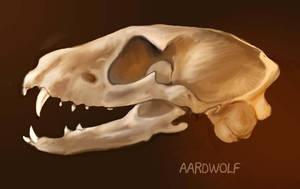 Aardwolf Skull by Reptangle
