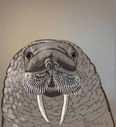 Walrus by Reptangle