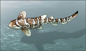 Leopard Shark by Reptangle