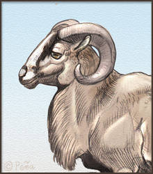 American blackbelly ram by Reptangle