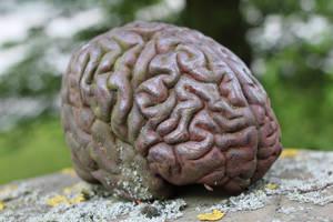 Brain 2 by LotusOnlineDe
