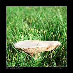 i live under a mushroom by superKeci