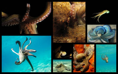 Tentacles collage by serdarsuer