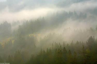 Into the mist by pestilence