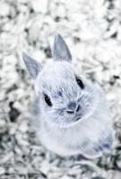 Little Bunny by JennyTangen