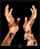 Hands by tal0n