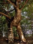 Tree Door by KoSTaSxD