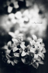 Scent donor. by Phototubby