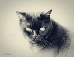 Superstition. by Phototubby