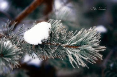 Winter detail. by Phototubby