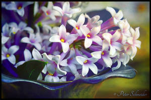 Parfume II. by Phototubby