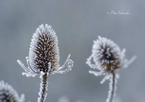 Cold morning. by Phototubby