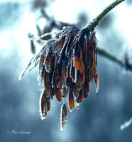 Short winter detail IV. by Phototubby