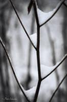 Baldaqiuns. by Phototubby