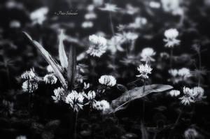 Grasland. by Phototubby