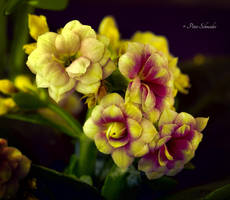 Beauty detail. by Phototubby