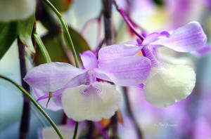 Orchid V. by Phototubby