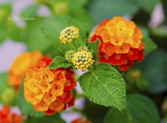 In my garden (VII). by Phototubby