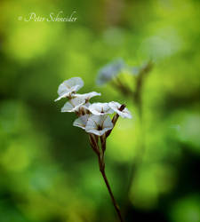 Miniature (III). by Phototubby