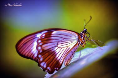 Metamorphoze. by Phototubby