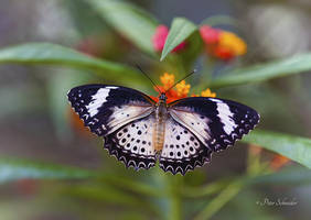 Beauty wings (XI). by Phototubby