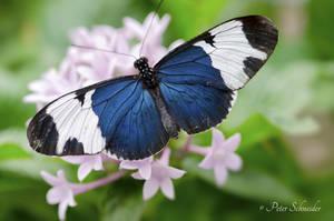 Beauty wings. by Phototubby