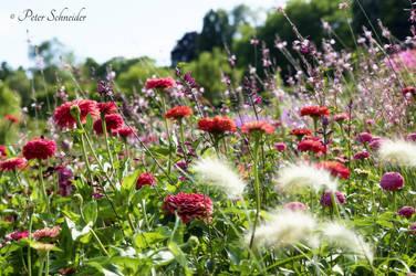 Flower field. by Phototubby