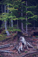 September in bavarian forest. by Phototubby