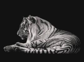 Felidae (II). by Phototubby